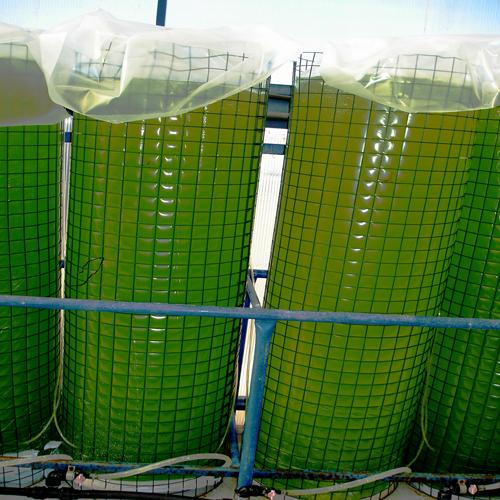 WATERTIGHT  PLASTIC BAGS  FOR FISH FARMING